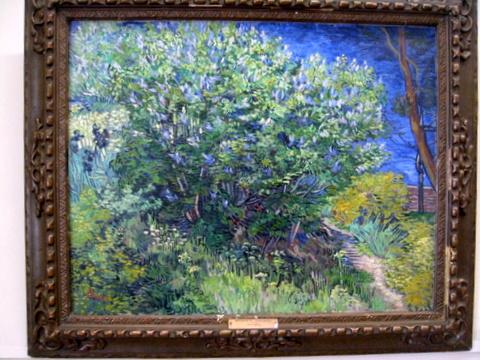 Vincent van Gogh, 'Bush', 1889